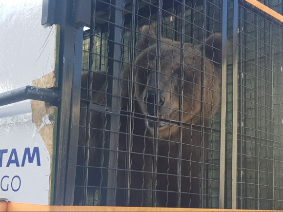 LATAM Cargo_Urso